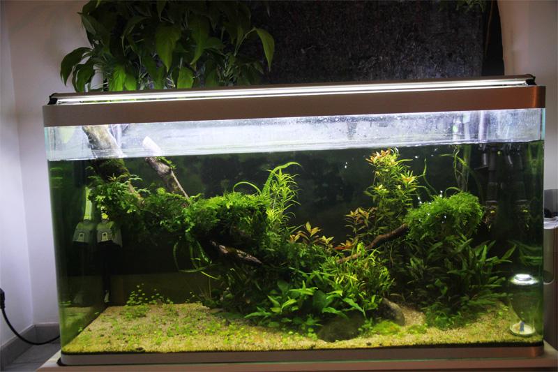 Mur végétal avec aquarium de 320L ---> Paludarium - Page 5 Img_0410