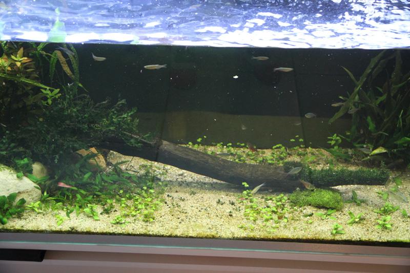 Mur végétal avec aquarium de 320L ---> Paludarium - Page 5 Img_0711