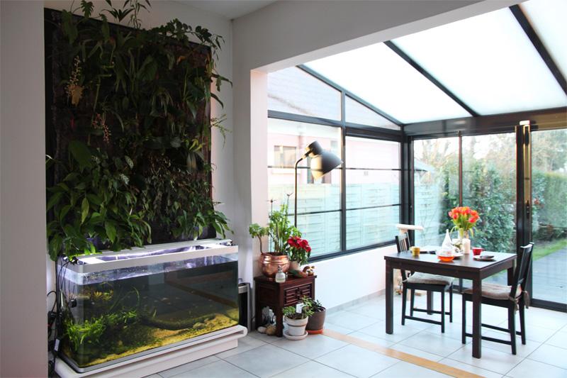 Mur végétal avec aquarium de 320L ---> Paludarium - Page 6 Img_0715