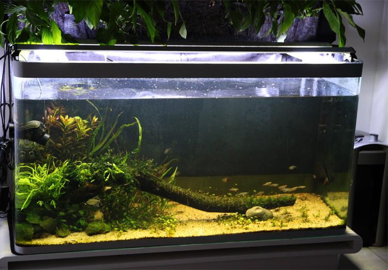 Mur végétal avec aquarium de 320L ---> Paludarium - Page 6 Img_0716