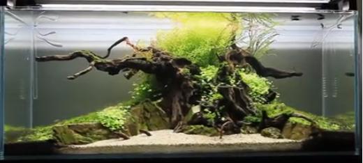 Mur végétal avec aquarium de 320L ---> Paludarium - Page 6 Sans-t10
