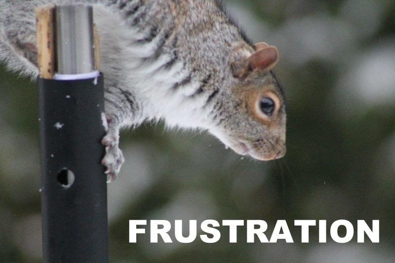 Frustration d'écureuil Acureu12