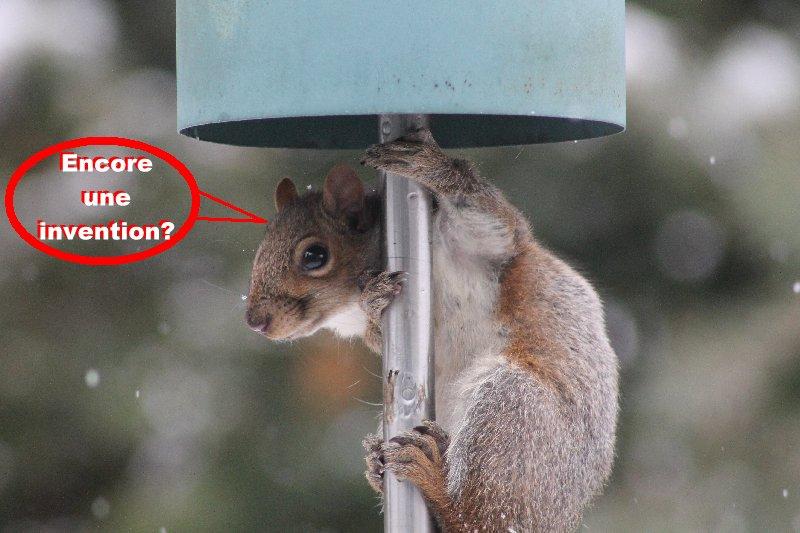 Frustration d'écureuil Acureu13