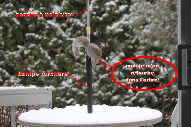 Frustration d'écureuil Acureu16