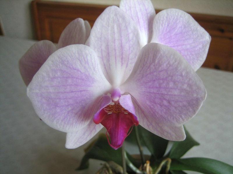 Glückwunsch, liebe Astrid Orchid10