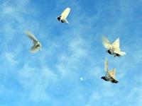 Голуби и домащняя живность в Казахстане