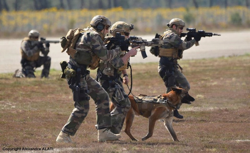 Animaux soldats - Page 6 6250