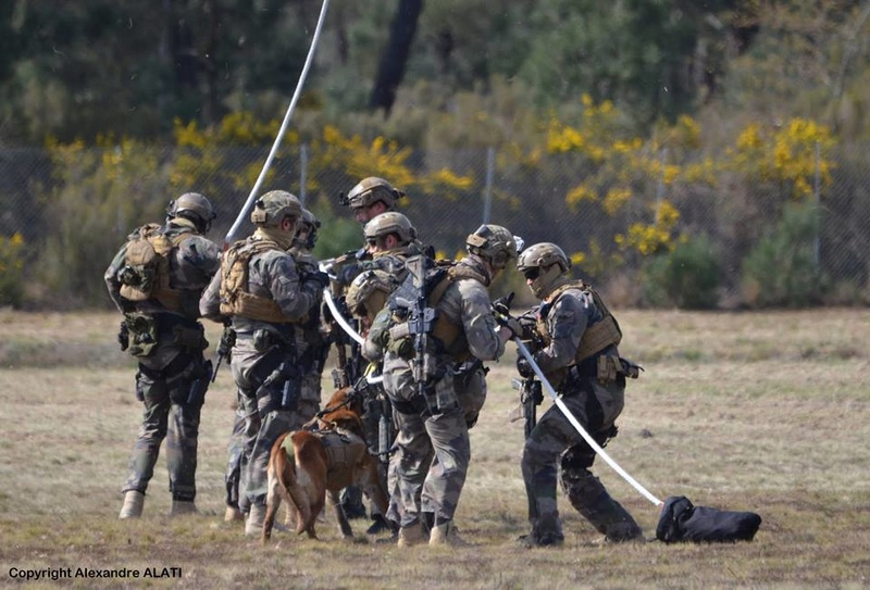 Animaux soldats - Page 6 6931