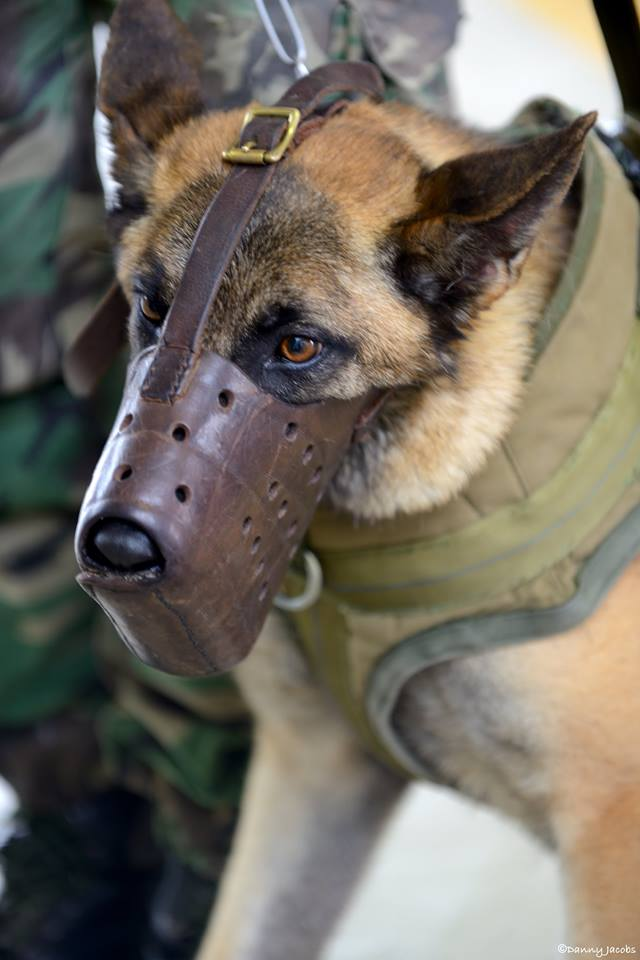 Animaux soldats - Page 6 98b26