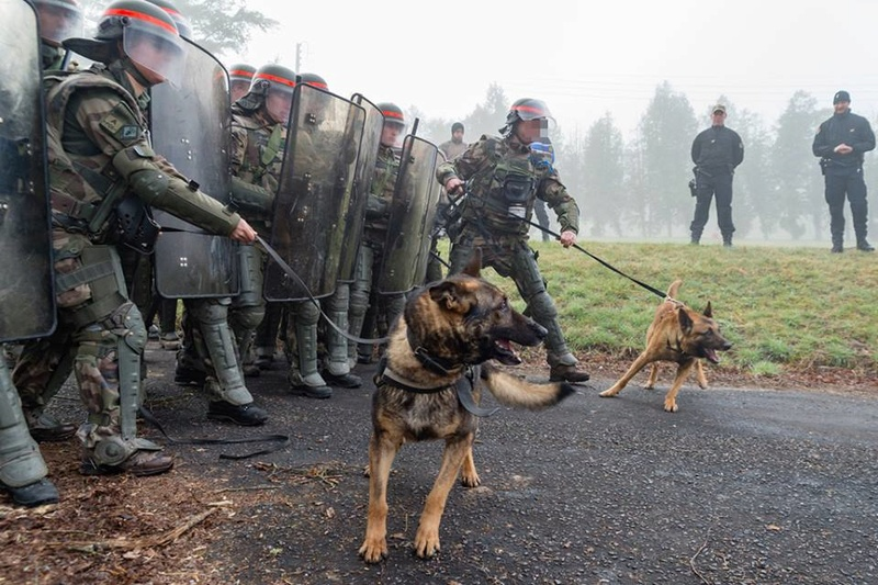 Animaux soldats - Page 7 98b50