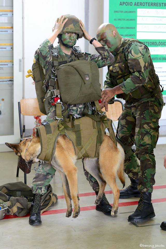 Animaux soldats - Page 6 98c22