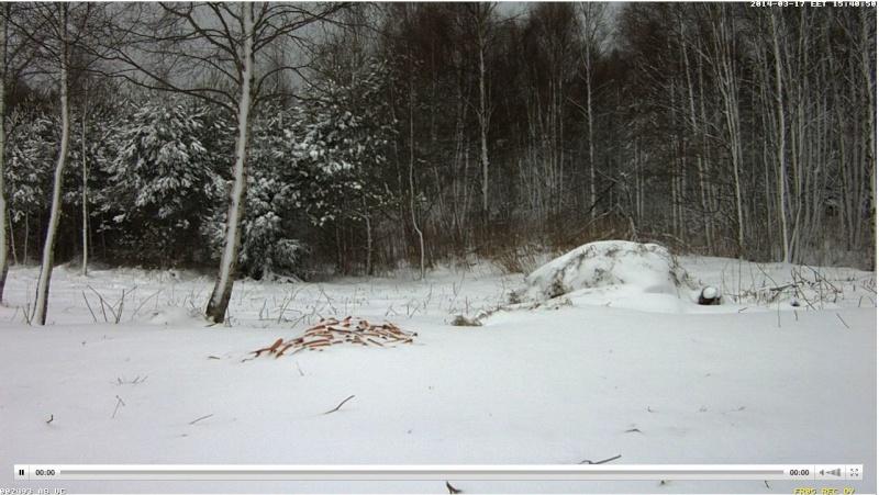 Wildtier-Livecams - Seite 6 Winter10