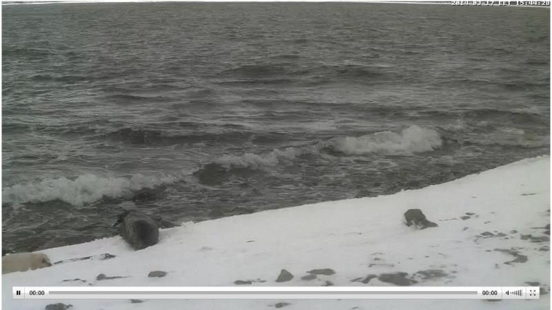 Wildtier-Livecams - Seite 6 Winter11
