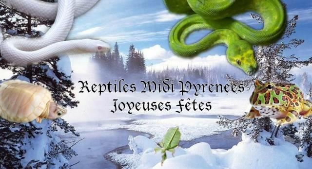 Reptiles Midi Pyrénées
