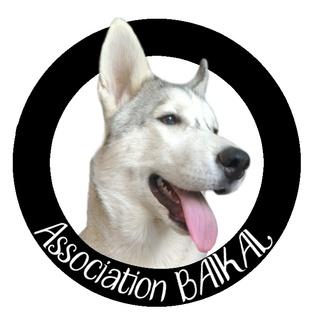 Recherche don pour l'Association BAÏKAL (40) Noir_s10