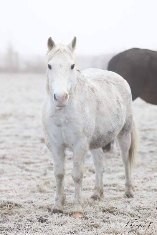 GRIBOUILLE - ONC poney né en 1994 - adopté en août 2009 par caro41 112