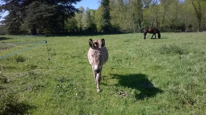 BOURIQUET - ONC âne né en 2009 - adopté en août 2017 par Marie - Page 2 2017_106