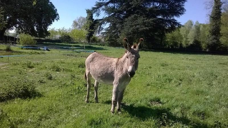 BOURIQUET - ONC âne né en 2009 - adopté en août 2017 par Marie - Page 2 2017_107