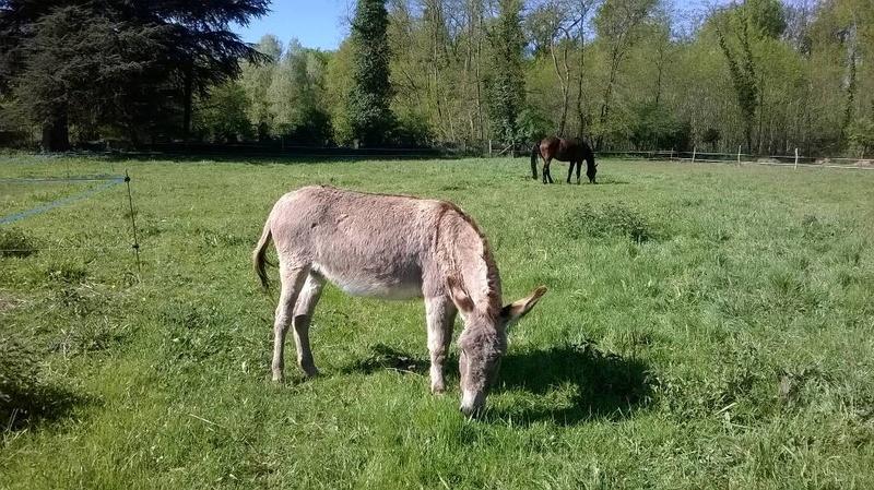 BOURIQUET - ONC âne né en 2009 - adopté en août 2017 par Marie - Page 2 2017_108