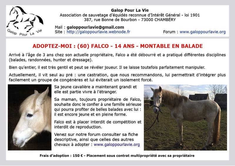 FALCO - ONC Selle typé Ibérique né en 2003 - Annonce désactivée en l'absence de nouvelles de la propriétaire  2017_227