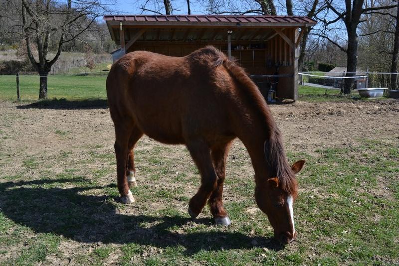 JERRY - ONC  selle (poney) né en 1991 - adopté en octobre 2015 par Patricia - Page 2 2017_326