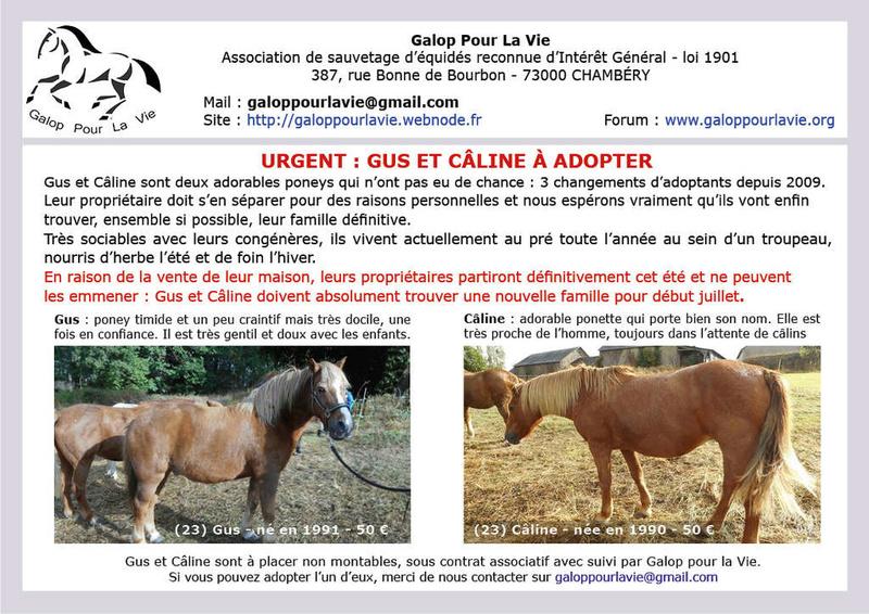 CÂLINE de JAULDES – Poney née en 1990 – devenue protégée GPLV en septembre 2017 2017_417