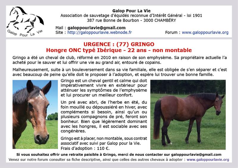 GRINGO – ONC Selle né en 1995 - Pris en charge par Pech Petit en octobre 2017 2017_620