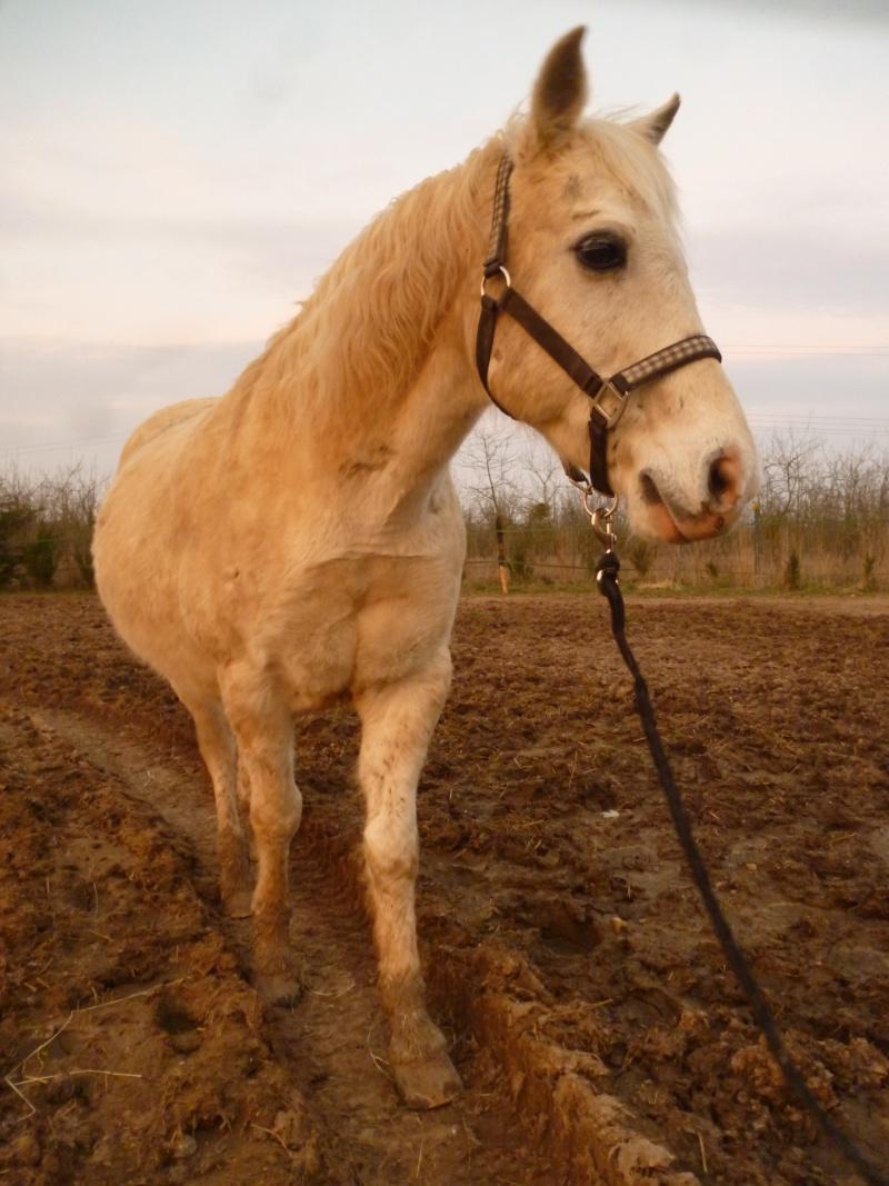 GRIBOUILLE - ONC poney né en 1994 - adopté en août 2009 par caro41 De_fac10