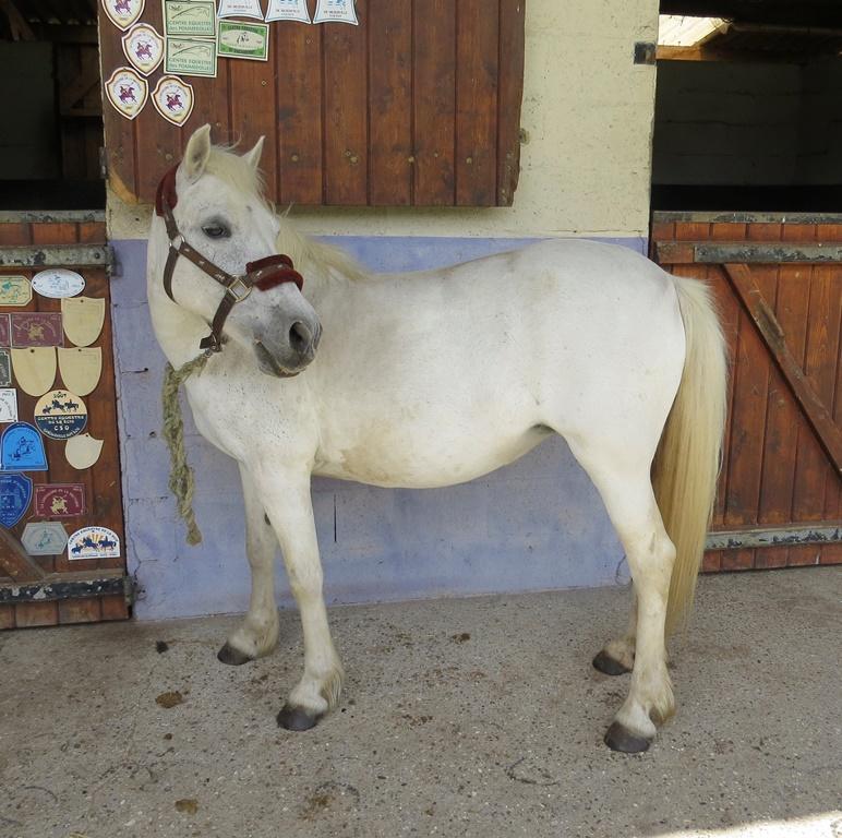 LOULA - OI Poney née en 1999 - accueillie chez Pech-Petit en septembre 2017   Loula_11