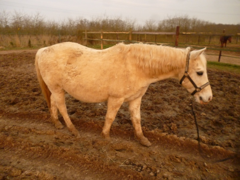 GRIBOUILLE - ONC poney né en 1994 - adopté en août 2009 par caro41 Profil10
