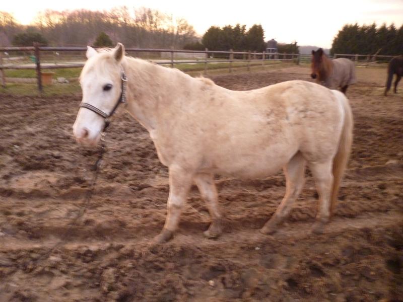 GRIBOUILLE - ONC poney né en 1994 - adopté en août 2009 par caro41 Profil11