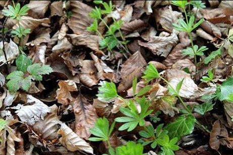 Une plante ,photo envoyé par mon frére . Chron300