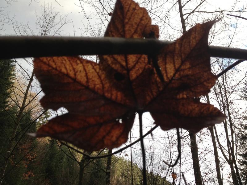 Herbstimpressionen  Img_0413