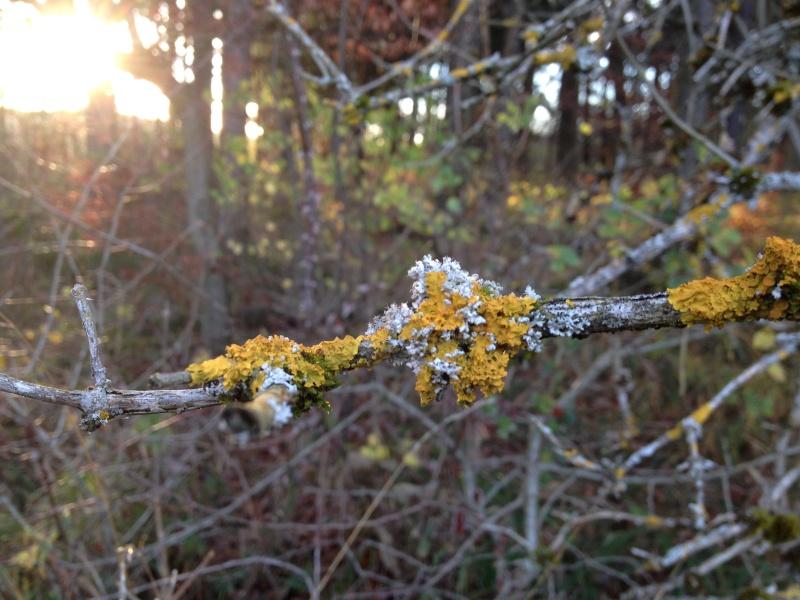 Herbstimpressionen  Img_3024