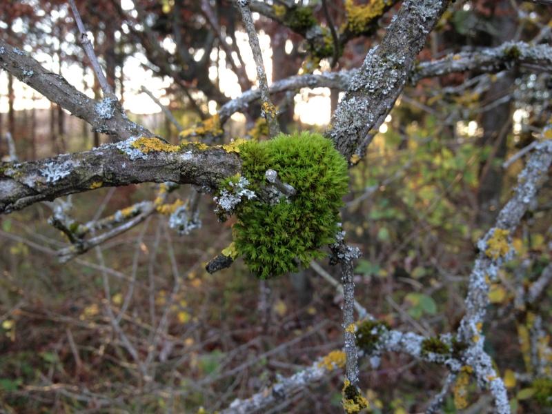Herbstimpressionen  Img_3025