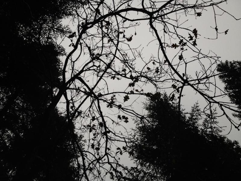 Herbstimpressionen  Img_3113