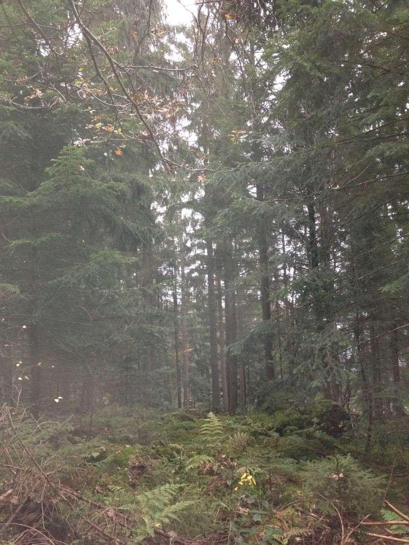Herbstimpressionen  Img_3114