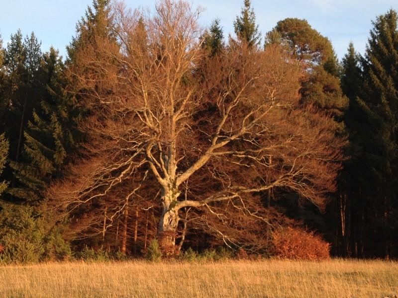 Herbstimpressionen  Img_3115