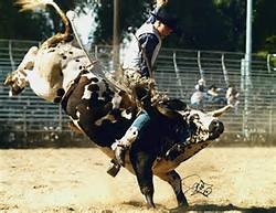 LA CORSICA Rodeo10