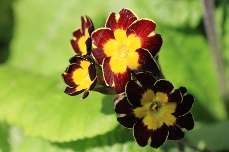 Quelques euphorbes et autres petites fleurs de printemps Img_7824