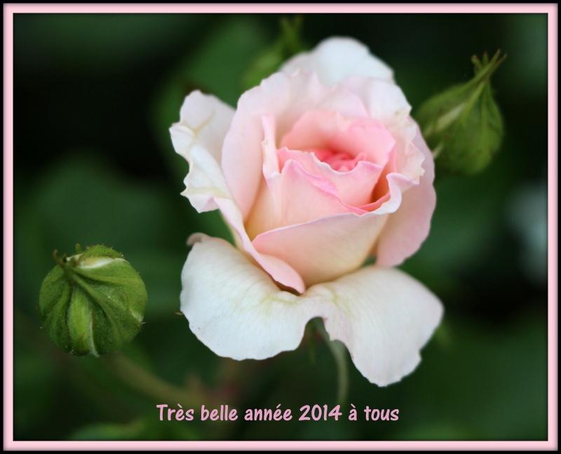 Bonne année ! Bel_am11