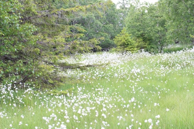 Flore des Vosges Img_3512