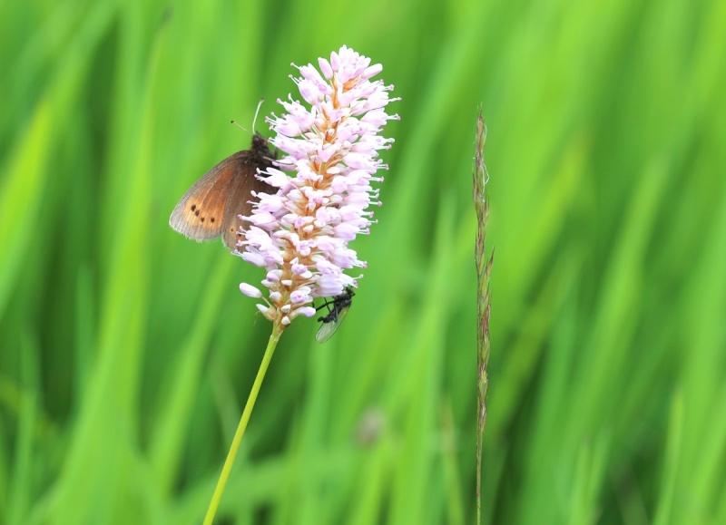 Flore des Vosges Img_3611