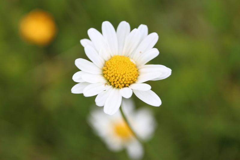 Flore des Vosges Img_3612
