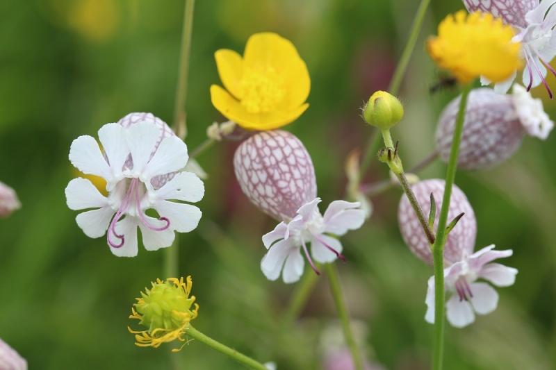 Flore des Vosges Img_3615