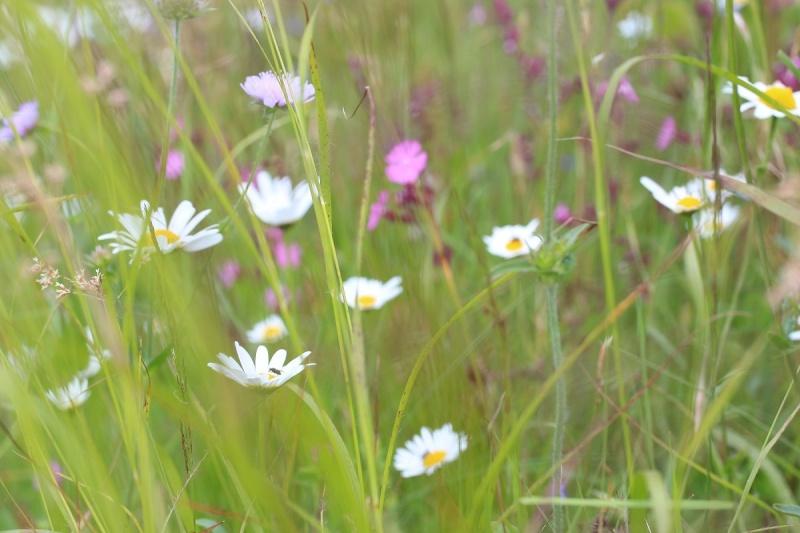 Flore des Vosges Img_3620