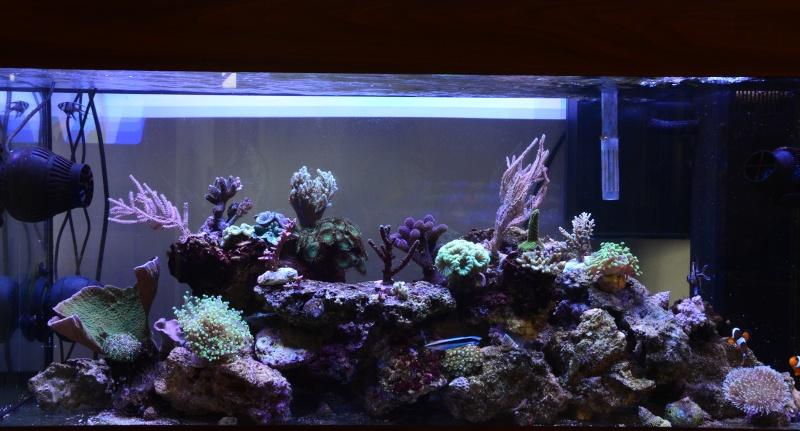 Trombinoscope des bacs en eau de mer Fond_e11