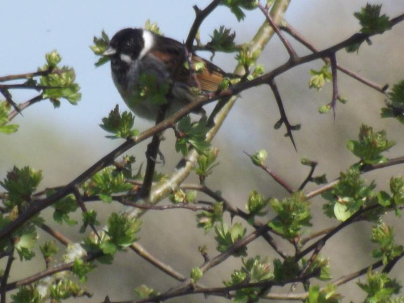 Photo oiseaux sauvage Dscf0910