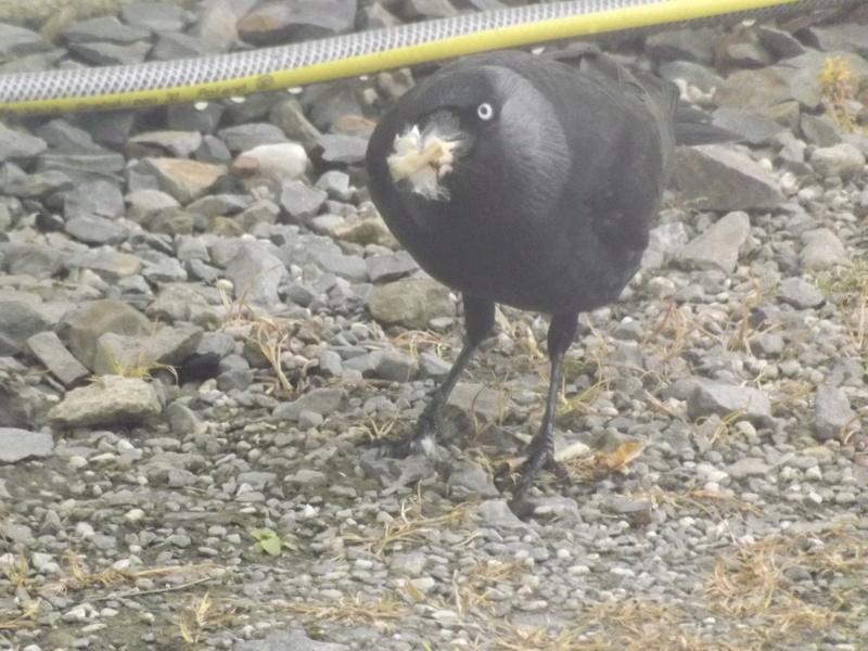 Photo oiseaux sauvage Dscf1018