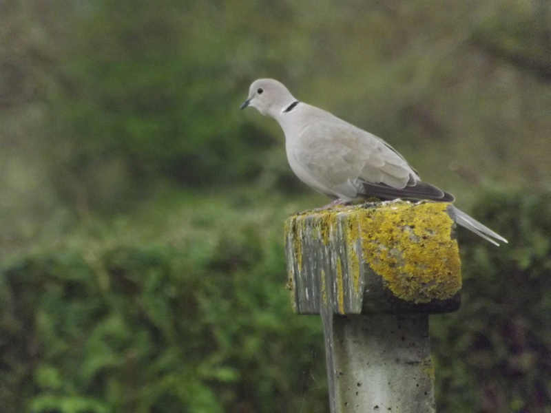 Photo oiseaux sauvage Dscf1019